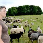 California Shepherd Brings Flock to Whitefield
