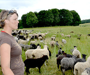 Laurel Banks looks on as her flock grazes on grass that is healthy and nutritious due to the Shepherd Craft Farm's practice of rotational grazing. (Abigail Adams photo)
