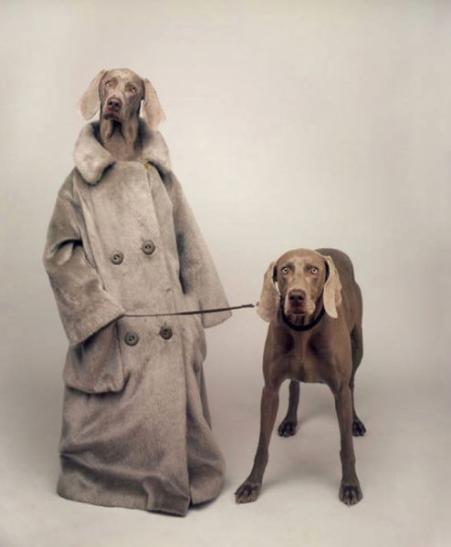 "William Wegman's Weimaraners Topper and Flo in ""Walking the Dog."""