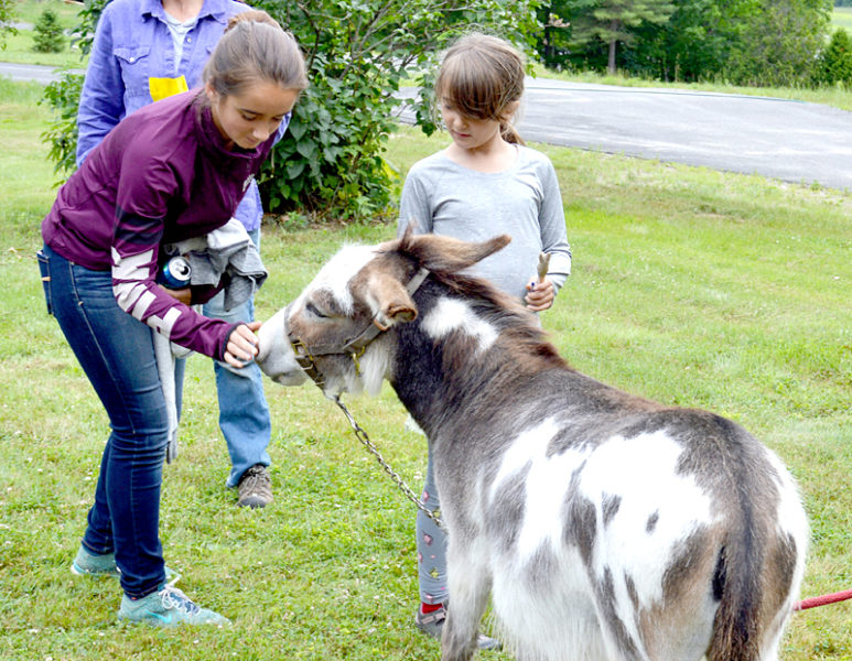 Tavin, one of two donkeys from Hideaway Farms to attend the Dresden Summerfest, enjoys attention from attendees. (Haley Bascom photo)