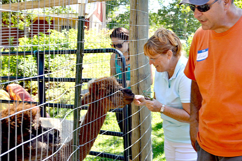 Kiley Roach (left) and mother Victoria feed two male alpacas while Cape Newagen Alpaca Farm co-owner Michael Ciccarelli looks on. (Haley Bascom photo)