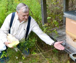 Edgecomb Honeybees on the Loose