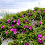 PWA Workshops at Beachcombers' Rest Nature Center
