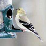 Annual PWA Bird Seed Sale