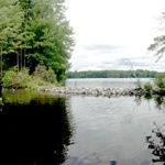 Midcoast Conservancy Continues Invasive-Plant Work
