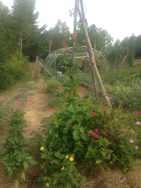 The compost-fed garden. (Photo courtesy Doug Wright)