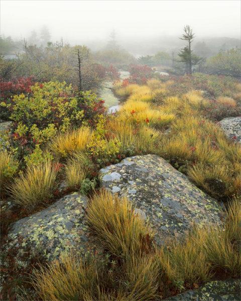 """""""Acadia Garden, Mt. Desert,"""" by Ronald Wilson"""
