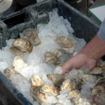 Pemaquid Oyster Festival Draws Crowd to Damariscotta