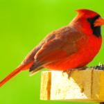 PWA Bird-Seed Sale Continues