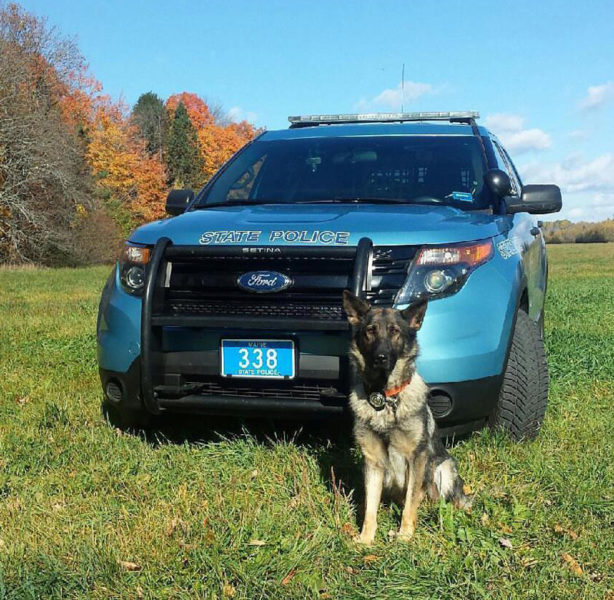 Maine State Police K-9 Bella found a missing woman in thick woods near her home in Lincoln County on Saturday, Oct. 15. (Photo courtesy Maine State Police)