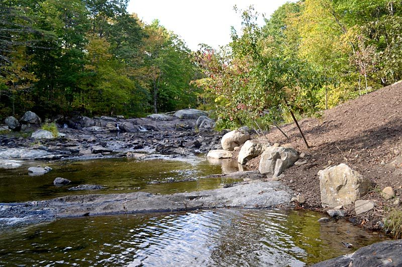 Trees were planted at an angle at the site of the former Northy Bridge on Howe Road in Whitefield to provide shade and cool the water for the fish in the West Branch of the Sheepscot River. (Abigail Adams photo)