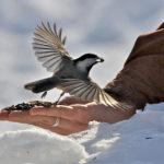Fall Mid-Coast Audubon Birdseed Sale