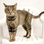 Fall for a Feline Program Prepares for Hurricane-Displaced Cats