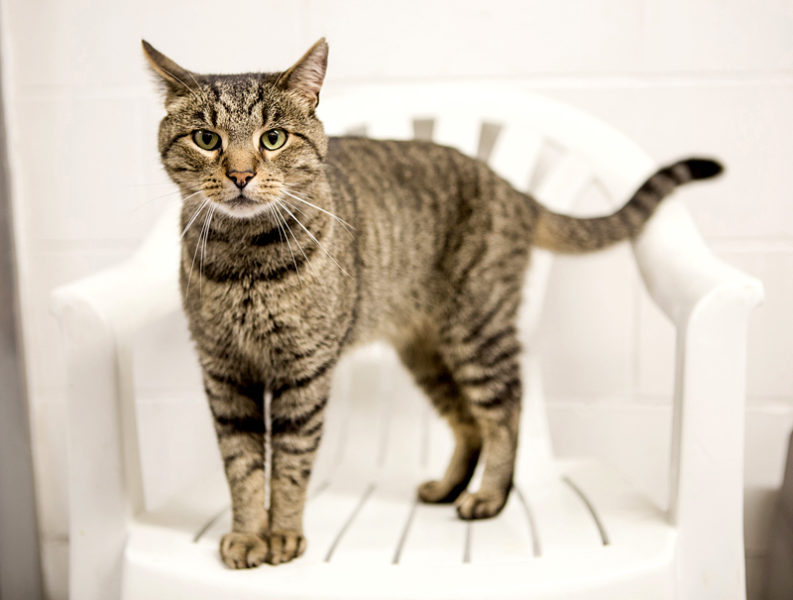 Tigger is available for adoption at the Lincoln County Animal Shelter in Edgecomb. Cats are fee-waived through the end of October.