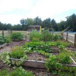 Medomak Middle School Garden Project Update