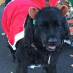 Santa's Secret Workshop in Wiscasset