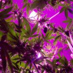 Anti-Marijuana Forces Urge Maine Lawmakers to Delay Legalization