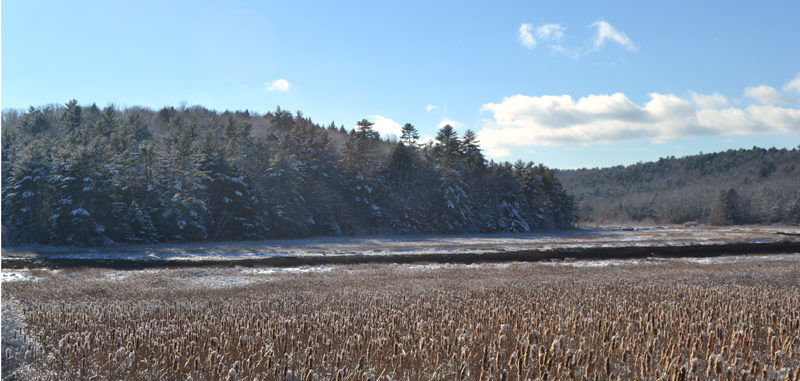 A view of Sherman Marsh in Newcastle. Maine Transportation Commissioner David Bernhardt will attend the Monday, Dec. 12 meeting of the Newcastle Board of Selectmen to discuss the Maine Department of Transportation's Sherman Marsh Wetland Bank project. (Maia Zewert photo)