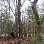 KELT Invites Public to Tour Squam Creek Preserve