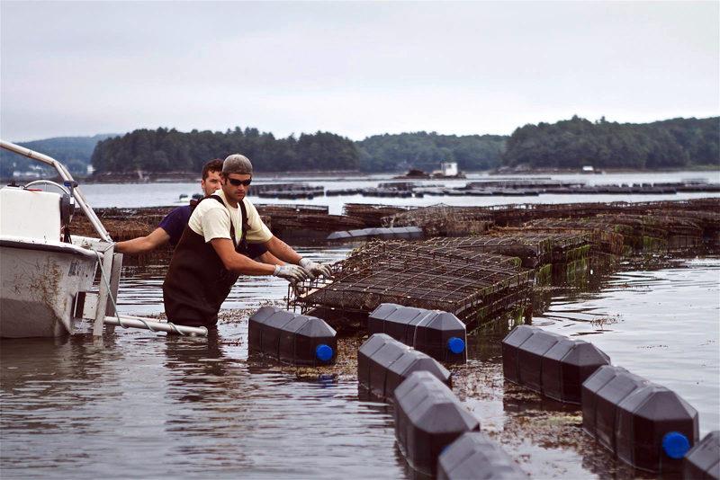 Mook oyster farm (Photo courtesy Bill Mook)