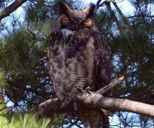 Owl Prowl, Full-Moon Hike at HVNC