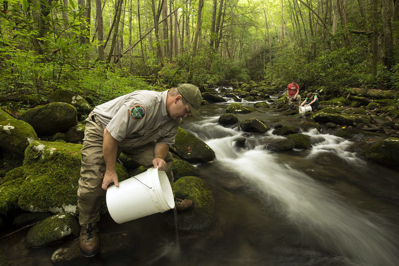 "A scene from the short film ""Bringing Back the Brooks,"" a poetic look at the Southern Appalachian brook trout, which is being brought back from the brink – by hand, bucket and hoof. The film is part of the Wild and Scenic Film Festival to be hosted by the Damariscotta River Association in February."