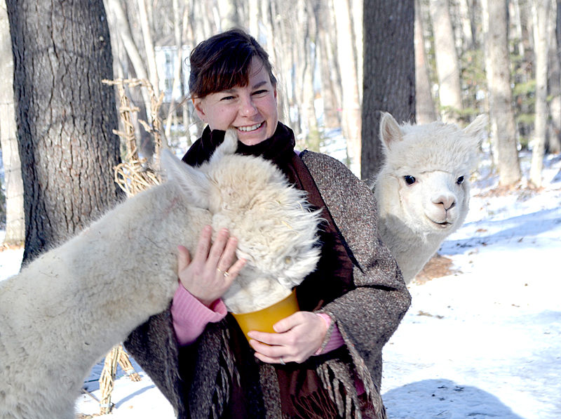 Alpacas Gussy and Fleecy enjoy a treat and a visit from their owner and caregiver, Lee Bodmer, the morning of Saturday, Feb. 4. (Charlotte Boynton photo)