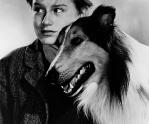 """A promotional shot for the classic 1943 movie """"Lassie Come Home,"""" starring Roddy McDowall."""