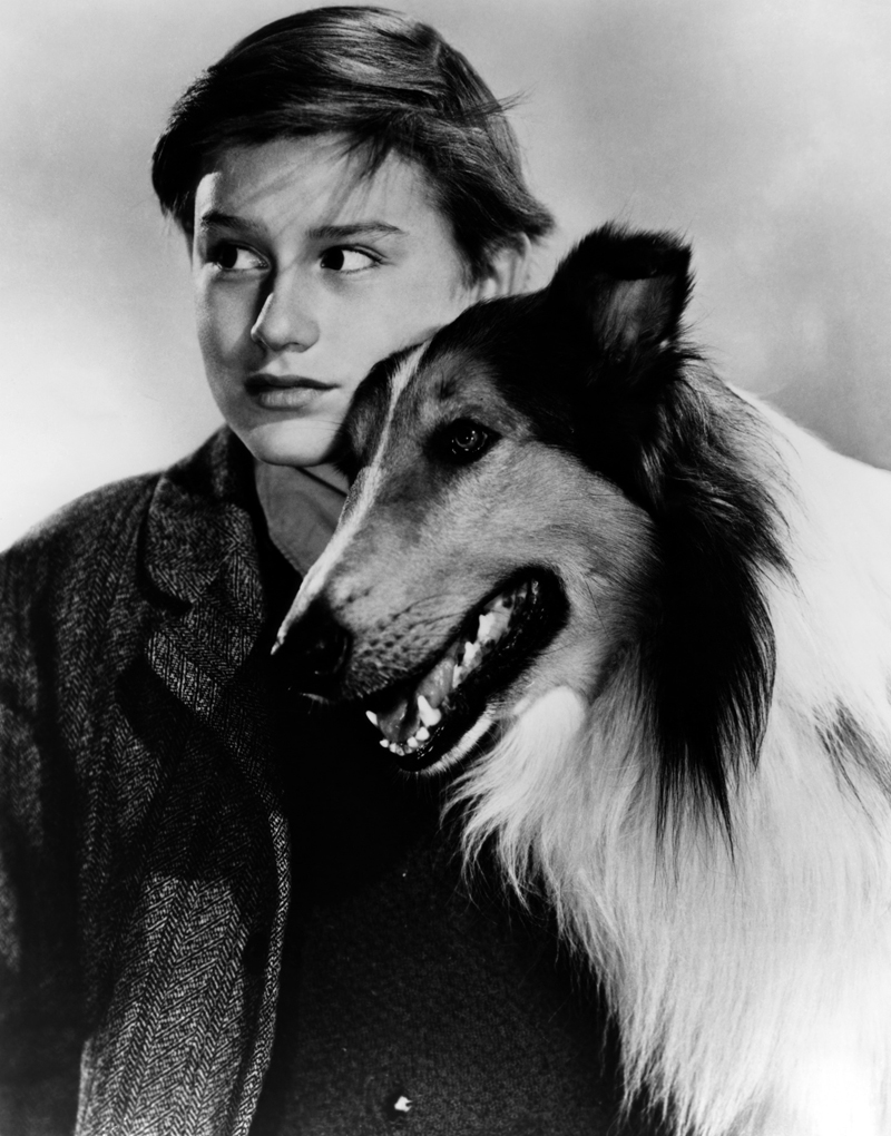 "A promotional shot for the classic 1943 movie ""Lassie Come Home,"" starring Roddy McDowall."