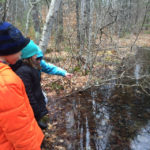 Explore the Wonders of Vernal Pools