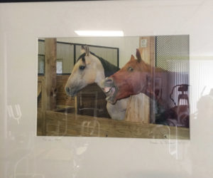 "Newcastle photographer Anna Shaw's sense of humor is front and center in ""Yin and Yang,"" a photograph of two horses -- one very serious and camera-shy, the other clearly a ham. The workout equipment at Shapers Fitness Gym, where this photograph is on exhibit, is reflected on the surface of the piece. (Christine LaPado-Breglia photo)"