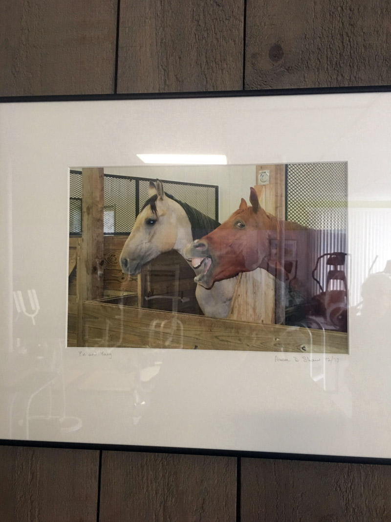 """Newcastle photographer Anna Shaw's sense of humor is front and center in """"Yin and Yang,"""" a photograph of two horses -- one very serious and camera-shy, the other clearly a ham. The workout equipment at Shapers Fitness Gym, where this photograph is on exhibit, is reflected on the surface of the piece. (Christine LaPado-Breglia photo)"""