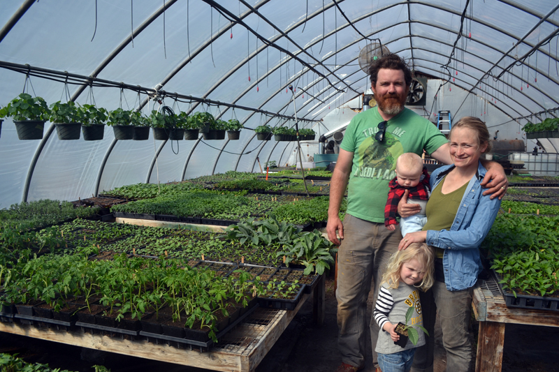 Morning Dew Farm owners Brendan McQuillen and Brady Hatch with their children, Everett and Clodagh McQuillen, stand in one of the greenhouses the farm is leasing at 49 Center St. in Damariscotta, the former home of Spencer's Greenery. (Maia Zewert photo)