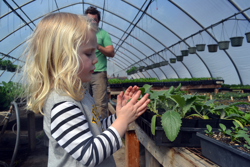 Clodagh McQuillen inspects one of the plants in the greenhouse at 49 Center St. in Damariscotta, the former home of Spencer's Greenery. Coldagh's parents, Brady Hatch and Brendan McQuillen, own Morning Dew Farm and are leasing the Center Street property. (Maia Zewert photo)