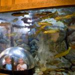 Newcastle Business Blends Art, Science in Aquarium Design