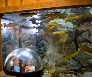 Children watch fish swim by in the Riverbed Aquarium, near the main entrance to L.L. Bean's flagship store in Freeport. The Newcastle office of Tenji Aquarium Design + Build designed the aquarium. (Photo courtesy Michael Richard)