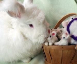 Daisy the rabbit nspects needle-felted rabbits.