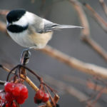 Learn Bird-Friendly Gardening
