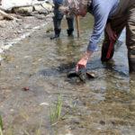 DRA Seeks Volunteers to Monitor Horseshoe Crabs