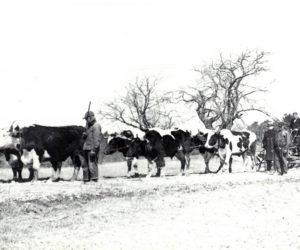 Ready to do roadwork in Newcastle, 1936.
