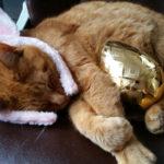 Oxbow Egg Hunt To Raise Funds for Maine Children's Cancer Program