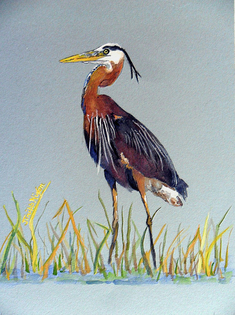 "The gouache titled ""Great Blue Heron,"" by Judy Nixon, is at the Pemaquid Group of Artists show currently at Pemaquid Watershed Association's office-gallery."