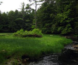 Geele Farm Preserve, along the Medomak River.