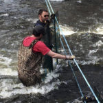 Aiding Alewives