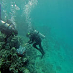 Bigelow Lab Lecture on Coral Reefs in Camden