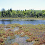 Guided Bog Walk at HVNC