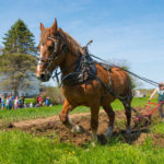 Horse-Plowing Demonstration at Round Top Farm Student Garden
