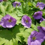 Old Bristol Garden Club Plant Sale Relocated