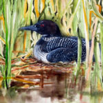 Pemaquid Group of Artists Show at PWA Closes May 12