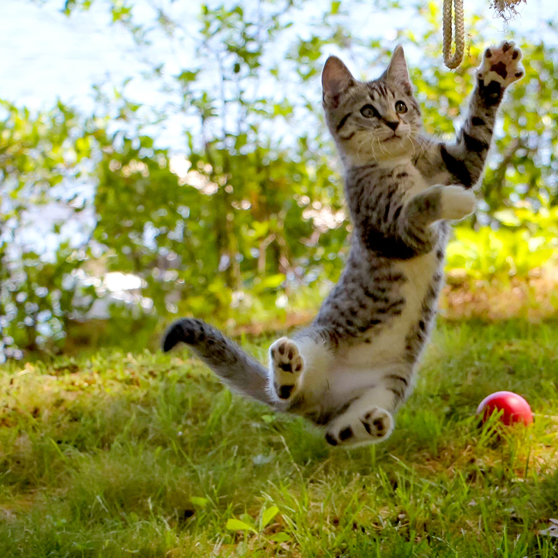 Rebekah Wilson's photo of Hank the kitten, snapped in Jefferson during the summer of 2016, received the most votes to become the fifth monthly winner of the #LCNme365 photo contest. Wilson will receive a $50 gift certificate from Smitten Collectibles & Nerdy Treasures, of Damariscotta, the sponsor of the May contest.